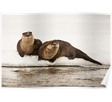 Otters, Lontra canadensis Poster