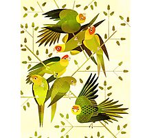 Carolina Parakeet Photographic Print