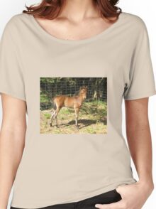 Teddy - English Riding Pony Colt Women's Relaxed Fit T-Shirt