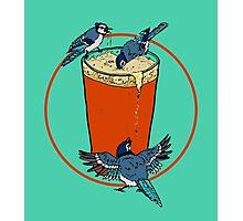 Brew Jays Photographic Print