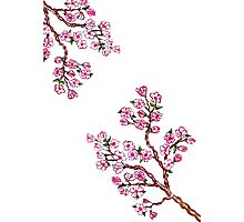 Sakura Branch Painting 4 Photographic Print