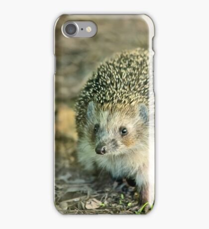 Young hedgehog in natural habitat iPhone Case/Skin