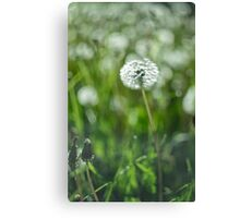 Beautiful white dandelion with seeds on green background Canvas Print