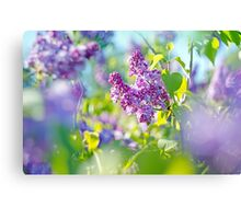 Green branch with spring lilac flowers Canvas Print