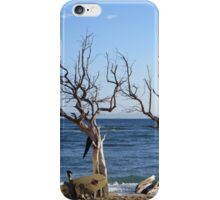Hawaii - Maui - Surf Tree iPhone Case/Skin