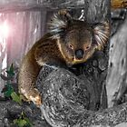 Flared koala by indiafrank