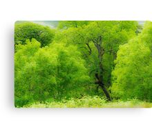 The Ash Tree Woods Canvas Print