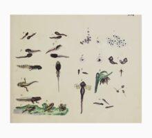 Naturgeschichte in Bildern mit erläuterndem Text E Strack 1820 Lief 3 Reptiles 017 Kids Tee