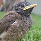 Angry bird by UncaDeej