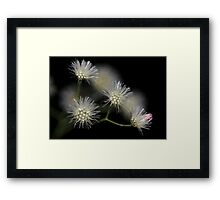 Dry flowers against black background Framed Print