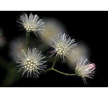 Dry flowers against black background Photographic Print