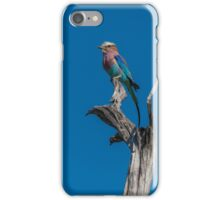 Lilac-breasted roller perched on dead tree stump iPhone Case/Skin