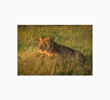 Lion lies staring in grass at dusk Unisex T-Shirt