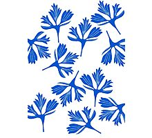 blue leaves Photographic Print