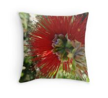 Red bottle brush flower close up Throw Pillow