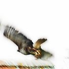Artscape   Don't fly away........... by Imi Koetz