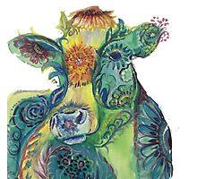 Comfort cow Photographic Print