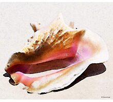 Conch Shell - Listen Photographic Print