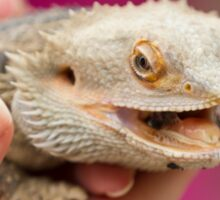 bearded dragon in the hand Sticker