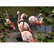 Flamingos in Flowers Photographic Print