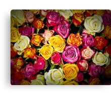 Color roses Canvas Print