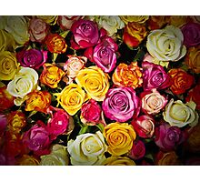 Color roses Photographic Print