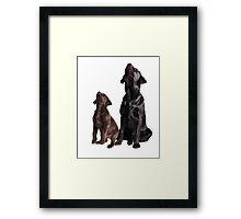 Labrador retriever puppies Framed Print