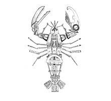 Art Lobster Photographic Print