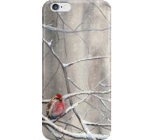 Red Bird On Snowy Branches - Winter Scene with Common Redpoll iPhone Case/Skin