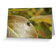 Fly on a Brown Leaf Greeting Card