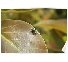 Fly on a Brown Leaf Poster