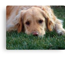 Gracie Pouts Canvas Print
