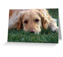 Gracie Pouts Greeting Card
