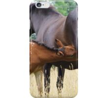 Foal and mare iPhone Case/Skin