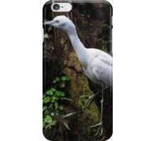 Immature Heron iPhone Case/Skin