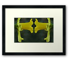 Daffodil Face Off Framed Print