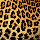 Leopard Print by CRDesigns