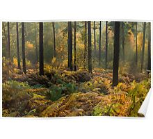 Whinfell Forest in Autumn Poster