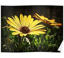 Flower Power 3 Poster
