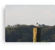 Seagull Sitting by Respite Artwork Canvas Print