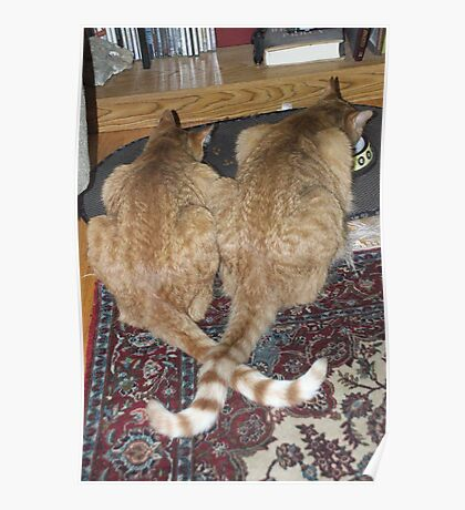 Kittens Eating with Tails Crossed Poster