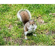 Grey squirrel on some grass Photographic Print