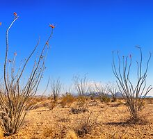 An Ocotillo's Garden by Owed To Nature