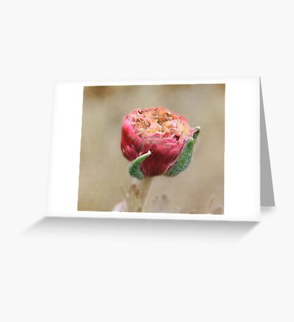 Close up of a Pretty Pink Flower Pod  Greeting Card