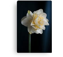 Butter and Eggs Daffodil  Canvas Print