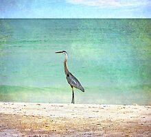 Big Blue Heron by designingjudy