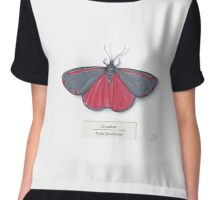 Cinnabar Moth on White Chiffon Top