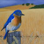 Bluebird on a Fence by John Marcum