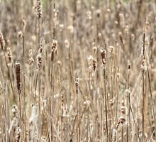 Cattails In The Wind by MotherNature