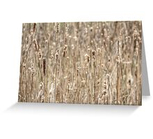 Cattails In The Wind Greeting Card